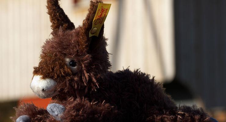 Auf der Ferienanlage Hopfenburg leben vom Aussterben bedrohte Haustierrassen, etwa der Poitou-Esel Beppo.