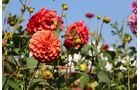 Blumen Gartenschau Bad Herrenalb 2017