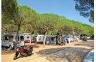 Campingplatz mit Pinien