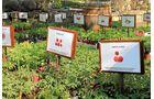 Die Züchtung köstlicher Tomatensorten ist das Steckenpferd von Erich Stekovics.