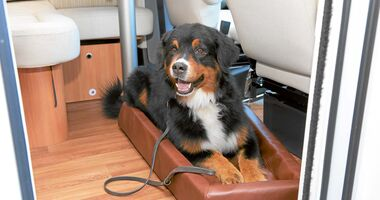 Leser-Workshop: Hund an Bord
