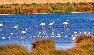 Naturschutzzone Coto de Doñana