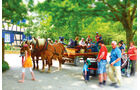 Pferdekutsche im Freilichtmuseum