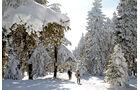 Verschneiter Wald im Harz